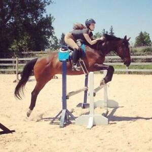 15.3 Thoroughbred Mare for Part-board/Co-board/Half-lease