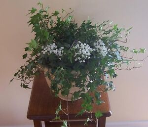 English Ivy (live) Plant in Decorative Pot