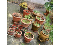 Collection of Terracota and other garden pots and plants, collect from NW3