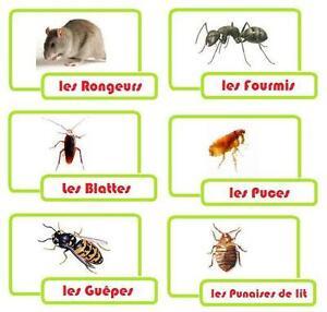 Exterminateur, Extermination,Punaises,Coquerelles, Rats,Souris