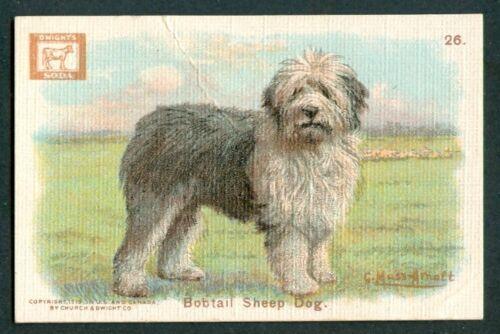 1910 BOBTAIL SHEEPDOG Dog Card CHURCH & DWIGHT J14a Small G MUSS ARNOLT Art