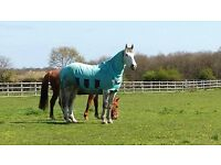 Retired and Injured Horse Livery, Wokingham, Berkshire - Sunrise Meadows Equine Retirement