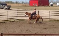 Horse training between Olds and Bowden!