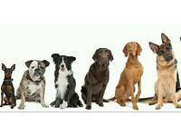 Are you in need of a dog sitter or a dog walker I'm here to help