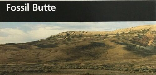 New 2014 FOSSIL BUTTE NM - Wyoming   NATIONAL PARK SERVICE UNIGRID BROCHURE  Map