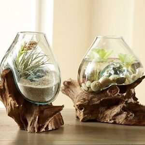Vase Verre Soufflé Branche Bois Caféier/ Glass vase Wood Roots