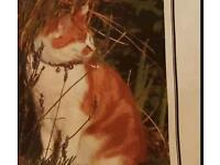 Lost Cat Ginger and White- Summertown