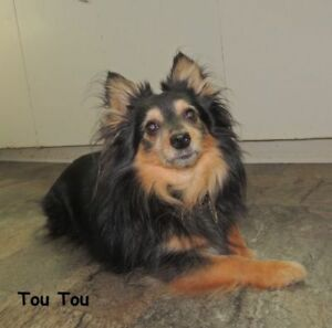 Handsome Tou tou is looking to be adopted
