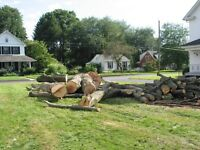 Tree trimming and removal Affordable prices