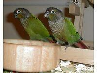 Look! Baby Parrots