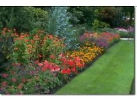 Perfect and professional gardener with reasonable prices