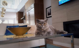 Professional in-home pet sitting services