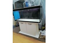 Fluwal Roma 240 fish tank with cabinet