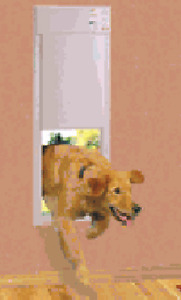 Automatic dog door and sound barrier