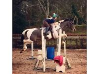 LIVERY WANTED FOR 1 HORSE (Ballygowan/Saintfield area)