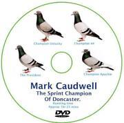 Racing Pigeon DVD