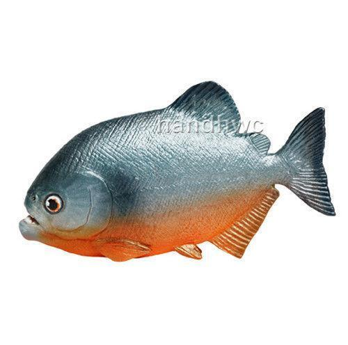 Piranha fish ebay for Pictures of piranha fish