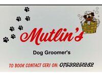 Mutlins dog grooming