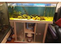 """AQUATLANTIS FISH TANK 40"""" x 16""""x 20"""""""