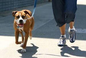 Dog Walking Service Sherwood Brisbane South West Preview