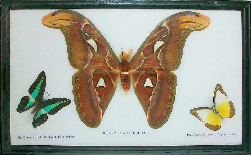 Your Guide to Butterfly Insect Displays
