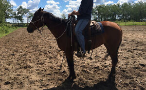 6 yrs old horse for sale