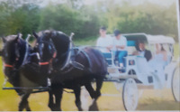Carriage and wagon rides for all occasions