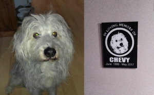 Custom Glass Signs of your Pet