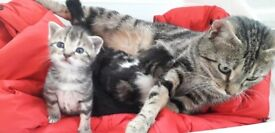 Kittens to find loving home