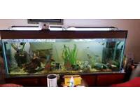 6 foot/680l/150gallon fish tank and stand + FREE 2nd tank