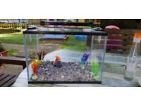 24l aquarium