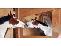 Horse stable mirror for sale - brand new