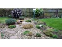Evie's Garden Services - qualified and experienced