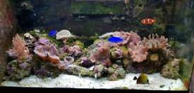 Red sea Max 250 full set up marine fish tank