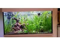 Tropical aquarium plants in South London