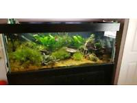 5ft Tropical Fish Tank with stand