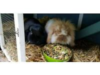 Branston & Pickle looking for loving home