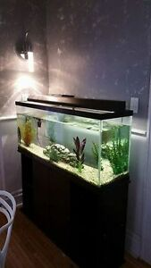 Fish, Fish Tank and Stand