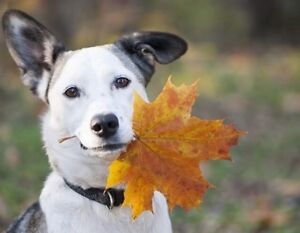Fall special! $10 OFF DOG/CAT GROOMING!