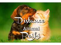 ANIMAL REIKI HEALER