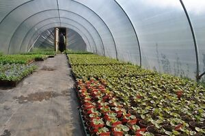NEW-14FT-X-84FT-POLYTUNNEL-KIT-GREENHOUSE-POLY-TUNNEL