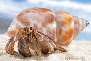 Wanted: Hermit Crabs