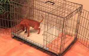 Potty Training Puppy Apartment!!