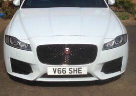 Number plate V66 SHE