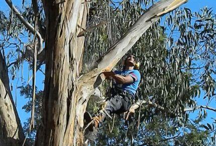 Tree Unit.. Preston Darebin Area Preview