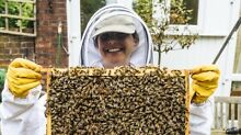 FUN bee course! Great location! Learn honey to hive! Mona Vale Pittwater Area Preview