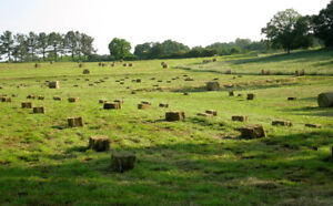 Small Square Bales of Hay or Straw