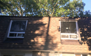 1 Bedroom Plus Den Apartment for Rent available March 1