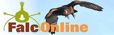 falconline