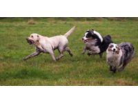 Hiring: Full time dog trainer/ dog handler/ animal carer